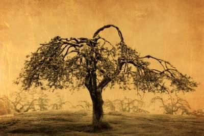 Joyce-Tenneson-Apple Tree in Orchard
