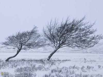arboles-invierno