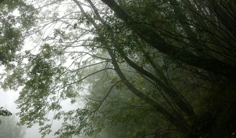 TR-bosque